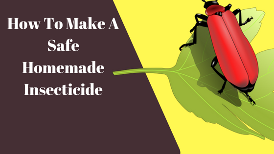safe homemade insecticide matthew sherdan portfolio